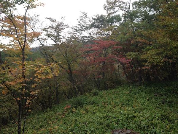 那須高原山荘・小啄木(こげら) お風呂からの風景朝